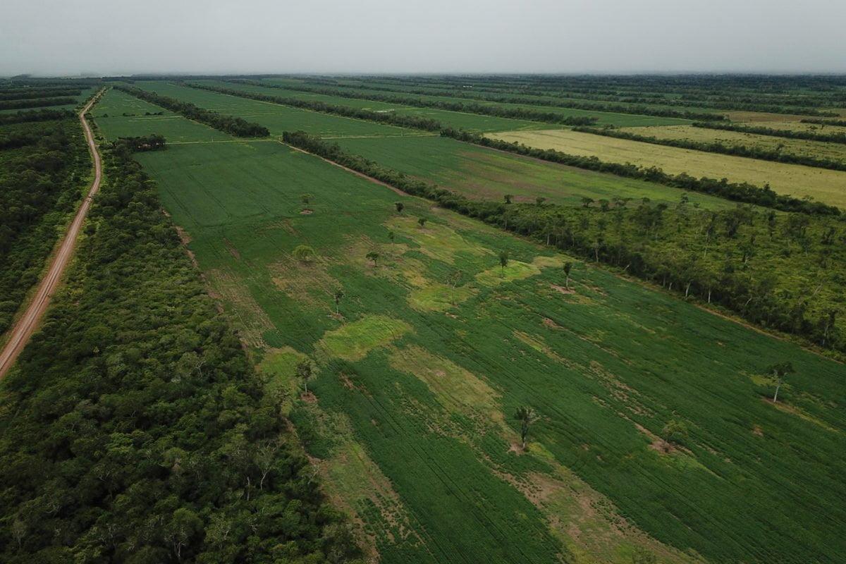 Expertos señalan que el ingreso demás transgénicos aumentarán la deforestación. Foto: Rhett A. Butler para Mongabay