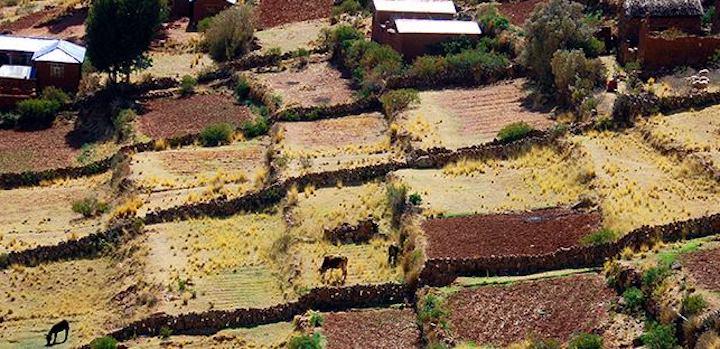 Especialistas temen que los transgénicos afecten la biodiversidad de Bolivia. Foto: Fundación Tierra.